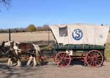 wagon 5 z
